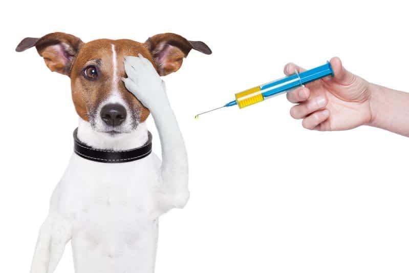 ¡Dale llevalos! Jornada especial con servicios gratuitos de castración y vacunación en la zona Oeste Alta.