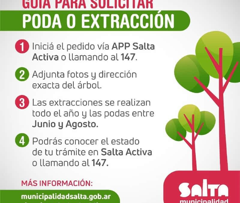 ¿Problemas con árboles? solicita una poda o extracción legal
